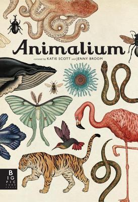 Animalium By Broom, Jenny/ Scott, Katie (ILT)